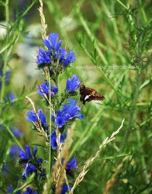 butterfly-11-x-14